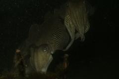onderwater_20111107_1027321020
