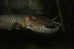 onderwater_20111107_1101764699