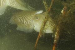 onderwater_20111107_1129895742
