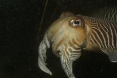 onderwater_20111107_1202847318