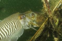 onderwater_20111107_1267098930