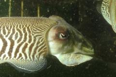 onderwater_20111107_1290916936