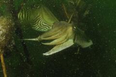 onderwater_20111107_1316103143