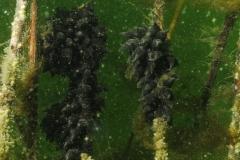 onderwater_20111107_1327340445