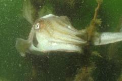 onderwater_20111107_1361836733