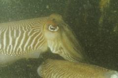 onderwater_20111107_1371981716