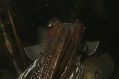 onderwater_20111107_1389000765