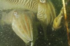 onderwater_20111107_1393685221