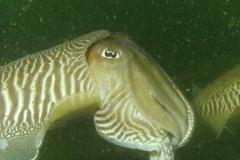 onderwater_20111107_1637840388
